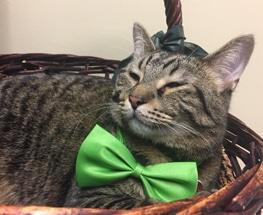 Green Bean S3 Cat