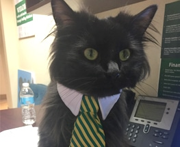 Guinness S3 Cat