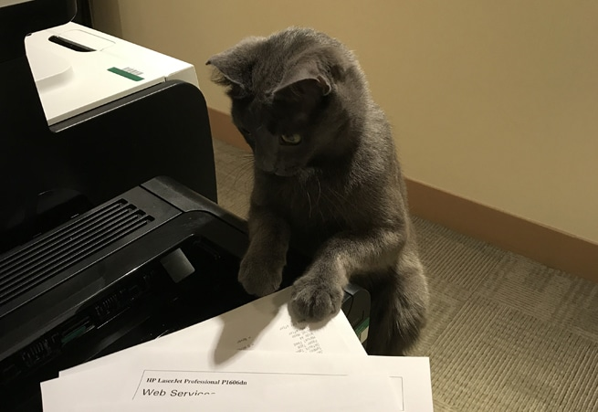 Cat playing with printer