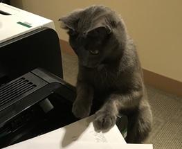 CTO S3 Cat
