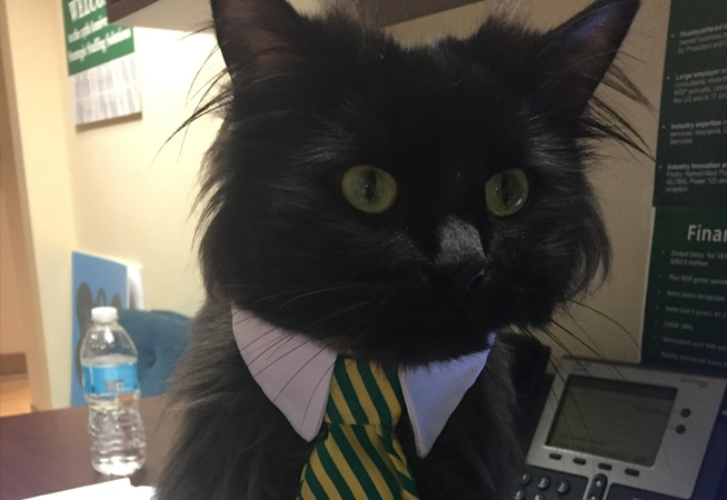 S3 cat in office